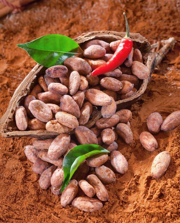 Habas del cacao en un shell fotos de archivo libres de regalías