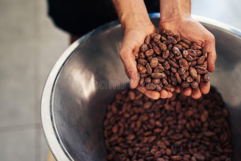 Habas del cocao de la tenencia del trabajador en una fábrica artesanal de la fabricación de chocolate fotografía de archivo
