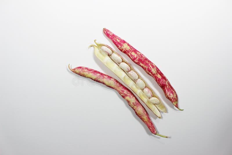 Download Habas Romanas En Fondo Blanco Aislado Imagen de archivo - Imagen de cooking, salmonete: 100532387