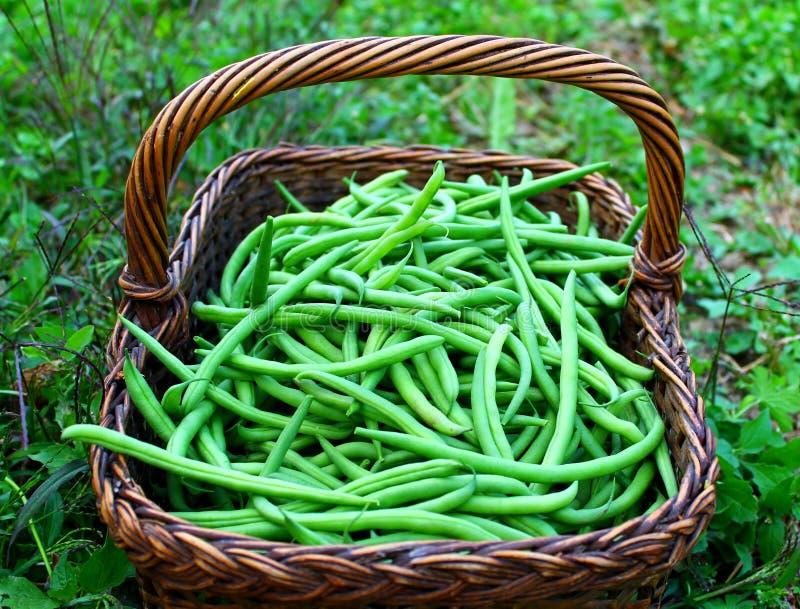 Habas verdes frescas imagen de archivo libre de regalías