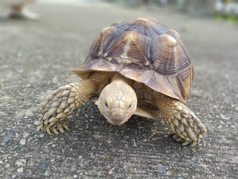 Haben Schildkröten Freizeitweg stockfoto