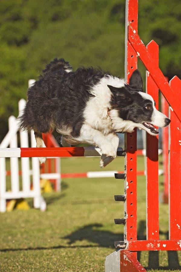 Habilidade de salto do cão fotografia de stock