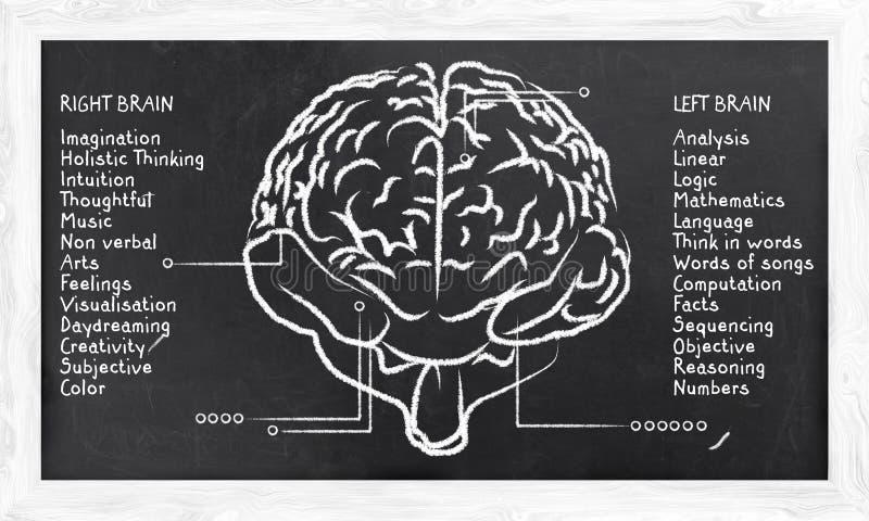 Habilidades para el hemisferio correcto e izquierdo stock de ilustración