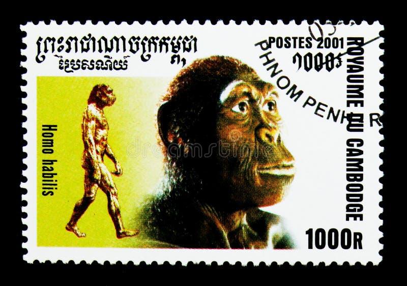 Habilis di omo, evoluzione del serie dell'umanità, circa 2001 immagini stock