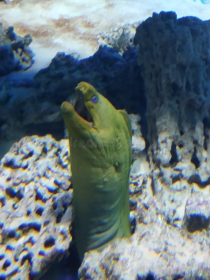Habitant curieux de mer photographie stock