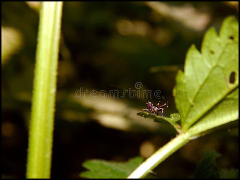 Habitante de la selva tropical foto de archivo