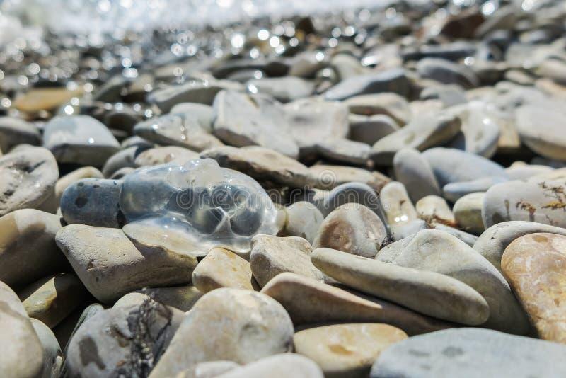 Habitante transparente del Mar Negro, medusa del mar, lanzada en la orilla rocosa del mar imagenes de archivo
