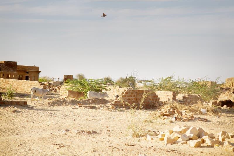 Habitantes del desierto en pueblos que desmenuzan foto de archivo libre de regalías