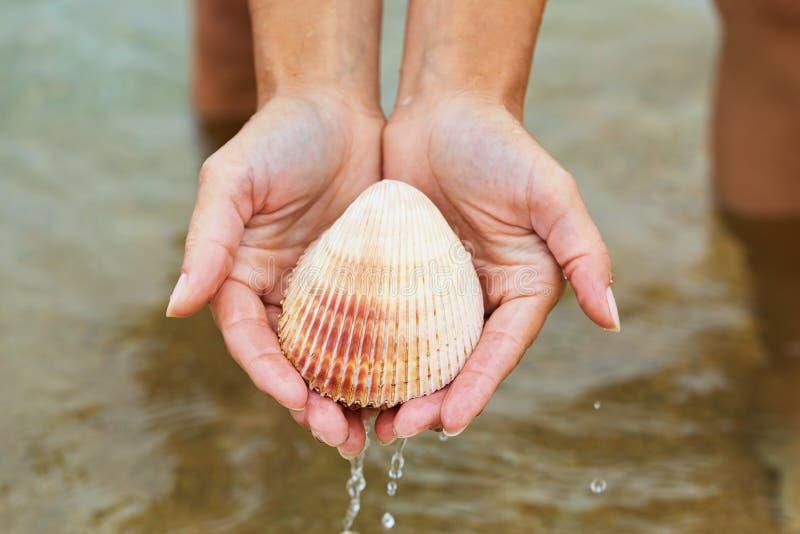 Habitantes do mar: Concha do mar bivalve nas mãos imagem de stock