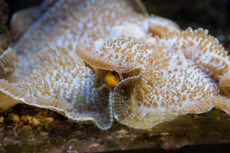 Habitantes marinos fotografía de archivo