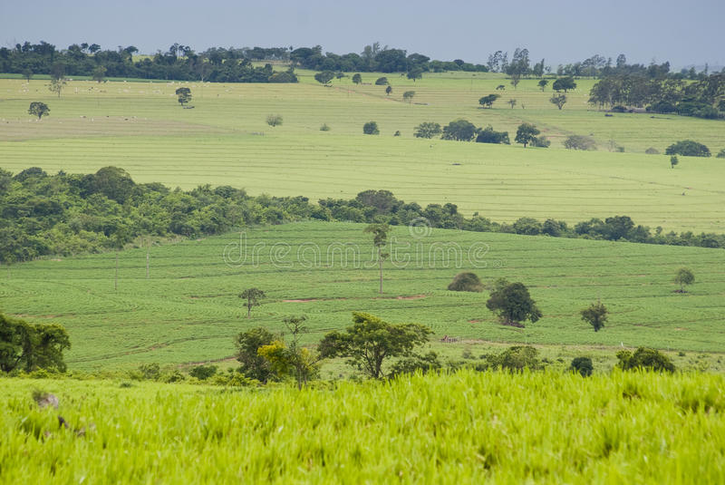 Habitat loss. Conversion of areas of rainforest for cattle ranching and agriculture in the northwest of Parana, southern Brazil stock image