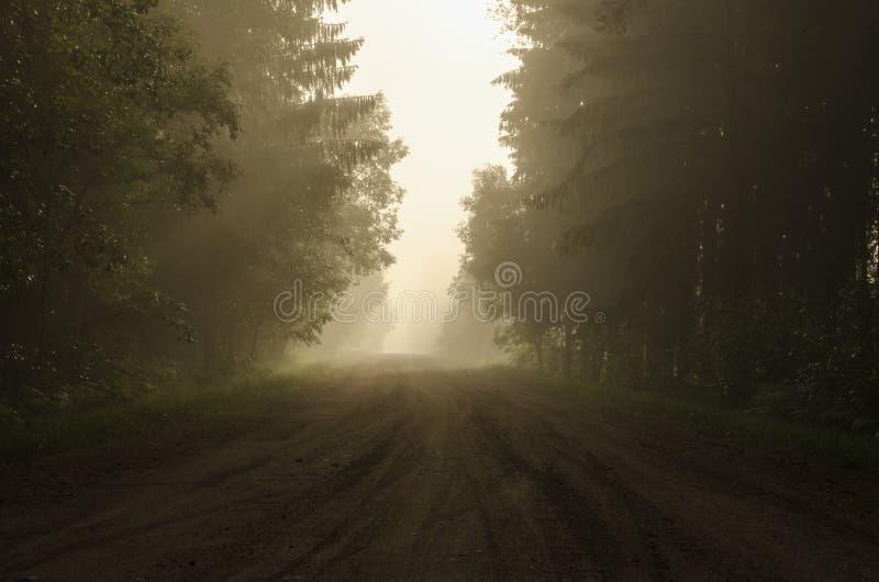 Hacer frente al amanecer en el camino forestal fotos de archivo libres de regalías