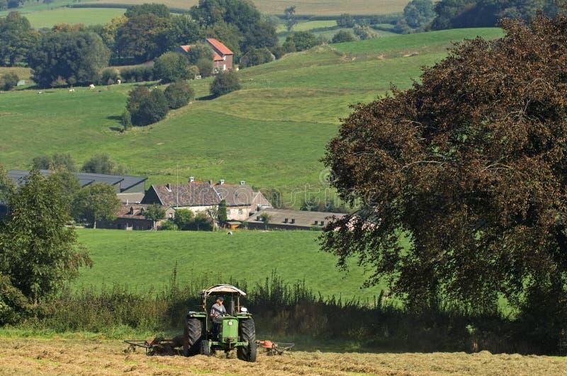Hacer heno el granjero belga en prado, Bélgica imágenes de archivo libres de regalías