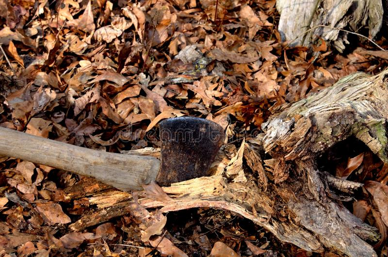 Hachage du bois en bois de démarreur du feu allumant avec la hache photo libre de droits