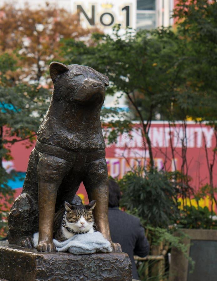 Hachiko statua w Shinjuku zdjęcia stock