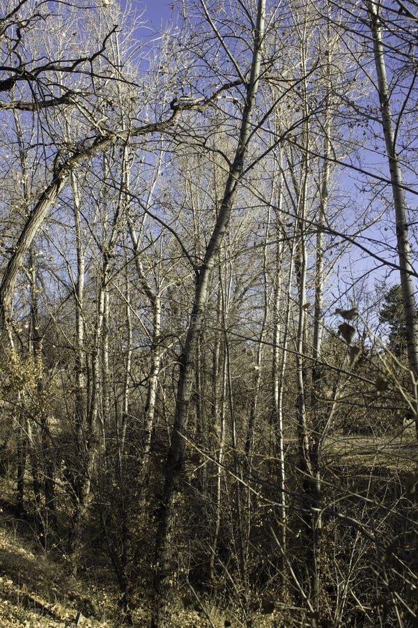 Hacia el cielo árboles foto de archivo