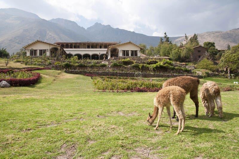 Hacienda peruviana fotografie stock libere da diritti