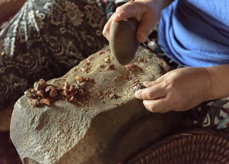 Haciendo a Argan Oil a mano - las nueces sensacionales se abren con una piedra fotos de archivo