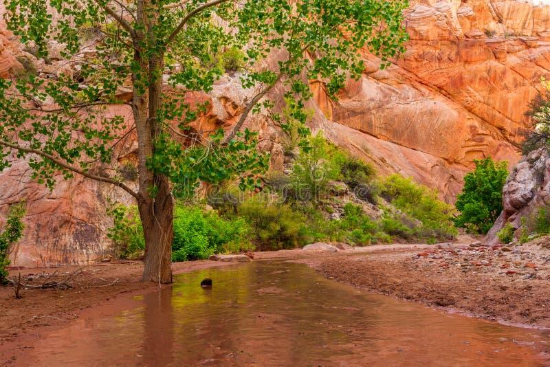 Hackberry Canyon stock image