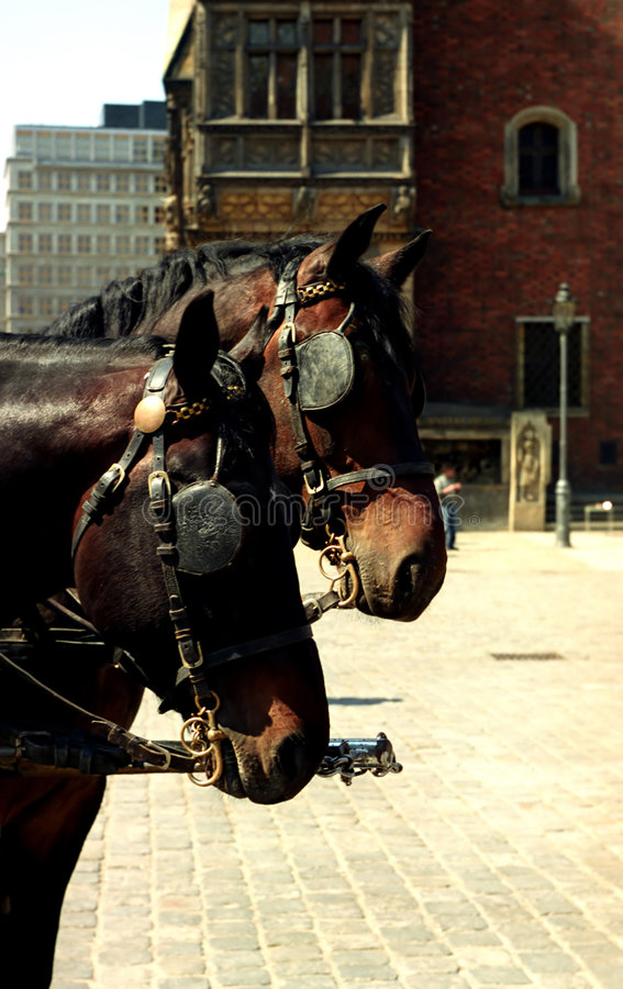 Download Hackney Horses stock image. Image of brown, town, architecture - 2681