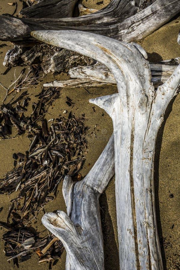 Hacząca i bieląca driftwood bela przy Flagstenga jeziorem, northwester fotografia stock