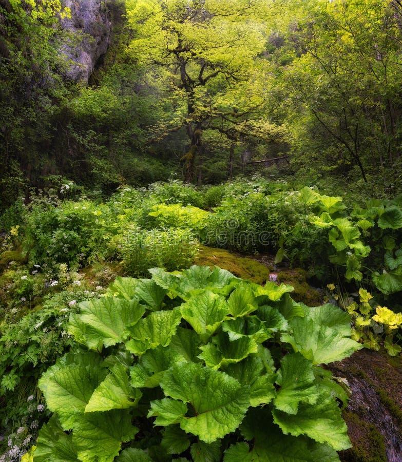 Hada profunda Forest In Apuseni National Park, Rumania del verano Paisaje pintoresco de Transylvanian con la selva tropical y el  foto de archivo