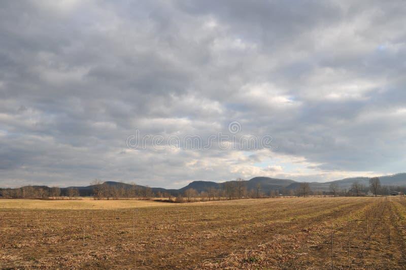 Hadley Farm Field 1 royaltyfri bild