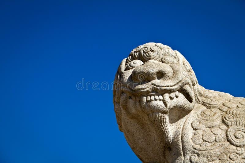 Haechi, das oben, gegen einen blauen Himmel schaut stockbild