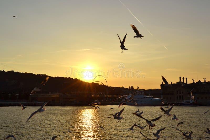 Hafen-Barcelona-Sonnenuntergang stockfotos