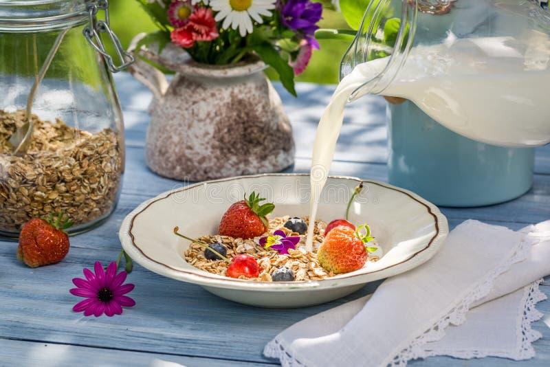 Hafermehl mit Frucht und Milch stockbild