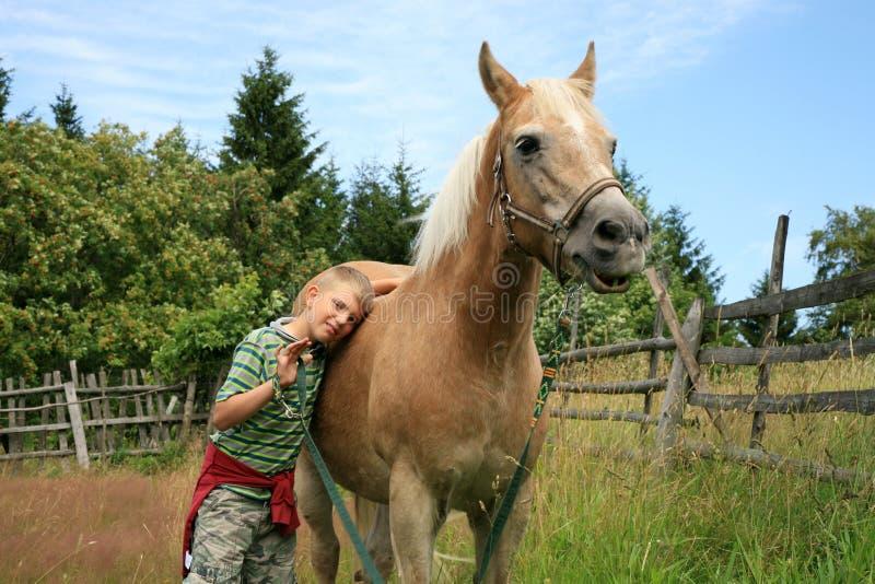 Haflinger da criança e do cavalo foto de stock