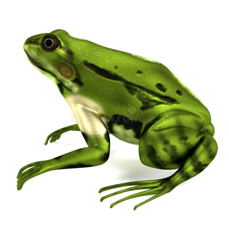 Haga de rana esculenta ilustración del vector