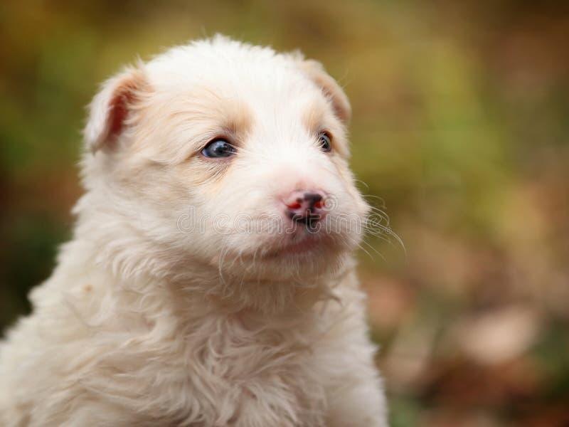 Haga frente a un pequeño perrito blanco en al aire libre fotografía de archivo