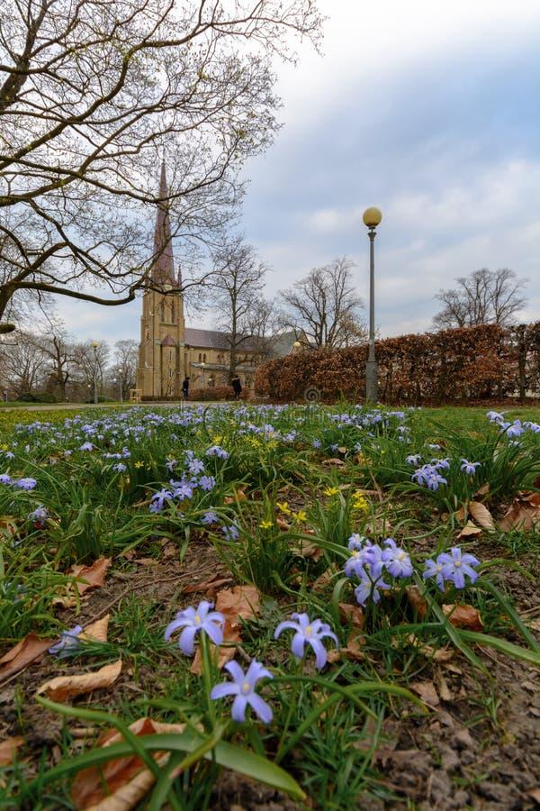 Hagakyrkan die met gele bloemen tijdens de vroege lente Gothenburg wordt omringd stock fotografie