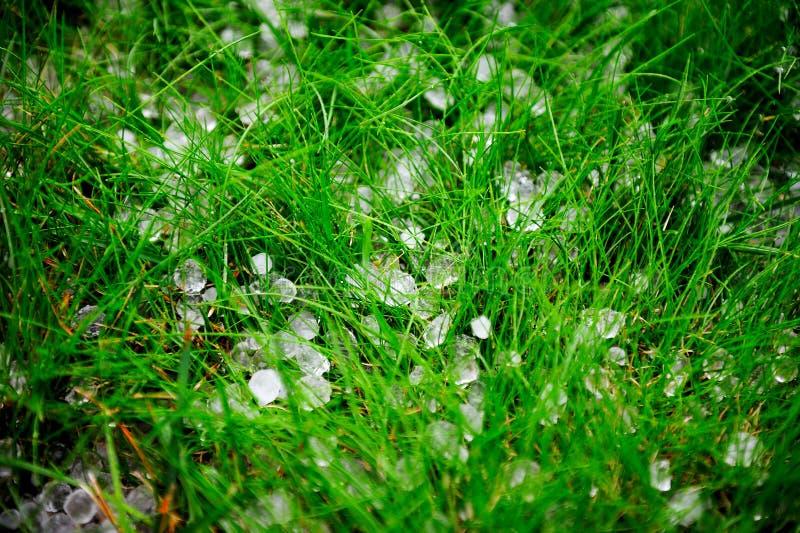 Hagel na onweer op gras stock afbeelding