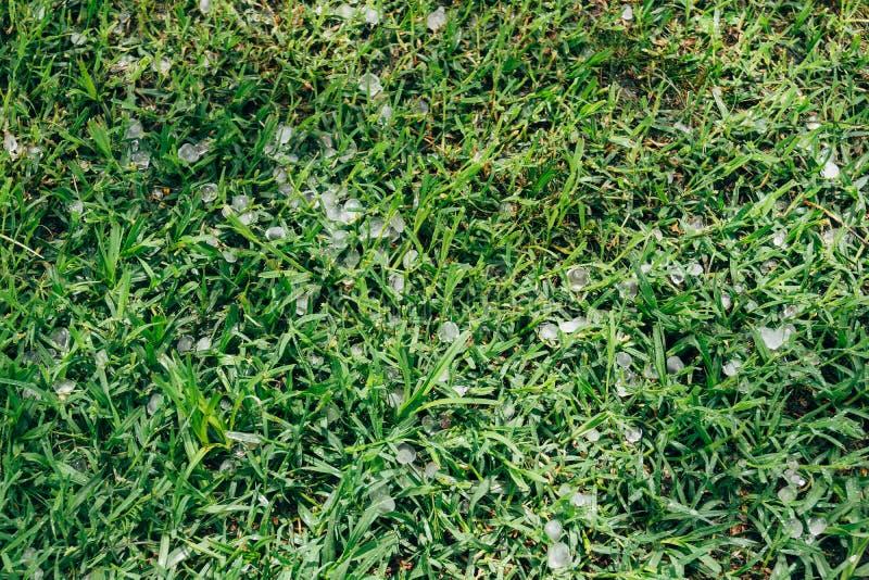 Hagel op gras stock fotografie