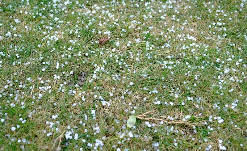 hagelstenen stock foto