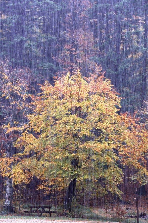 hagelstorm arkivfoto