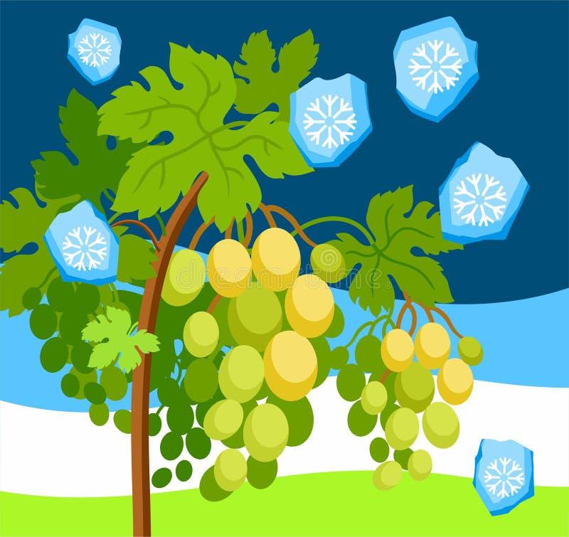 Hagla i vingården, ett naturligt fenomen, färg, vektorbild royaltyfri illustrationer