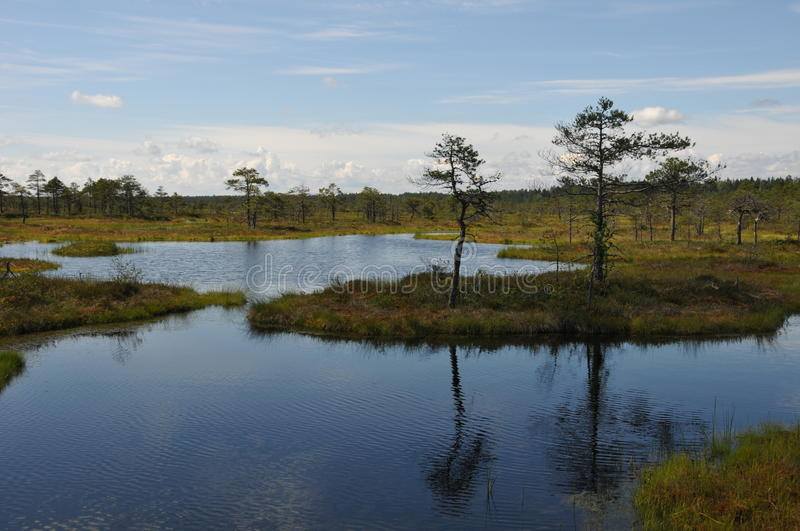Hags in Kakerdaja Bog stock images