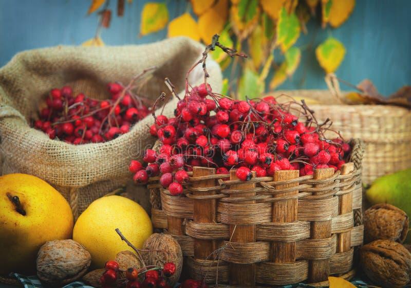 Hagtornbär i en korg med päron, muttrar, gulingsidor arkivbilder