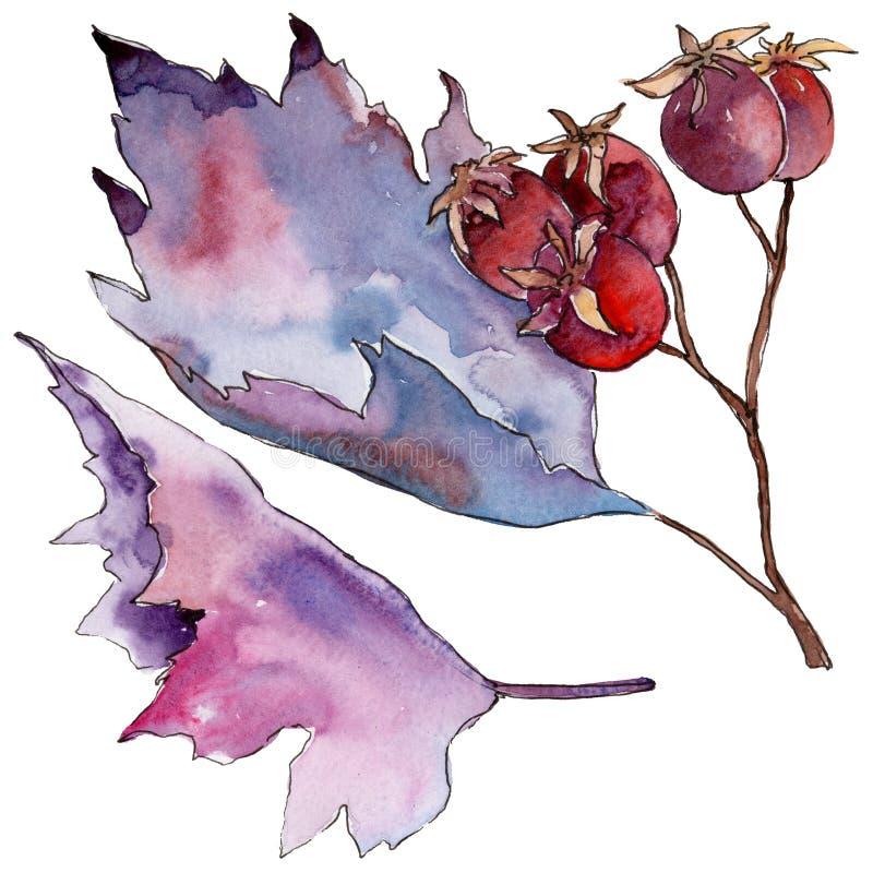 Hagtornblad Blom- lövverk för bladväxtbotanisk trädgård vektor illustrationer