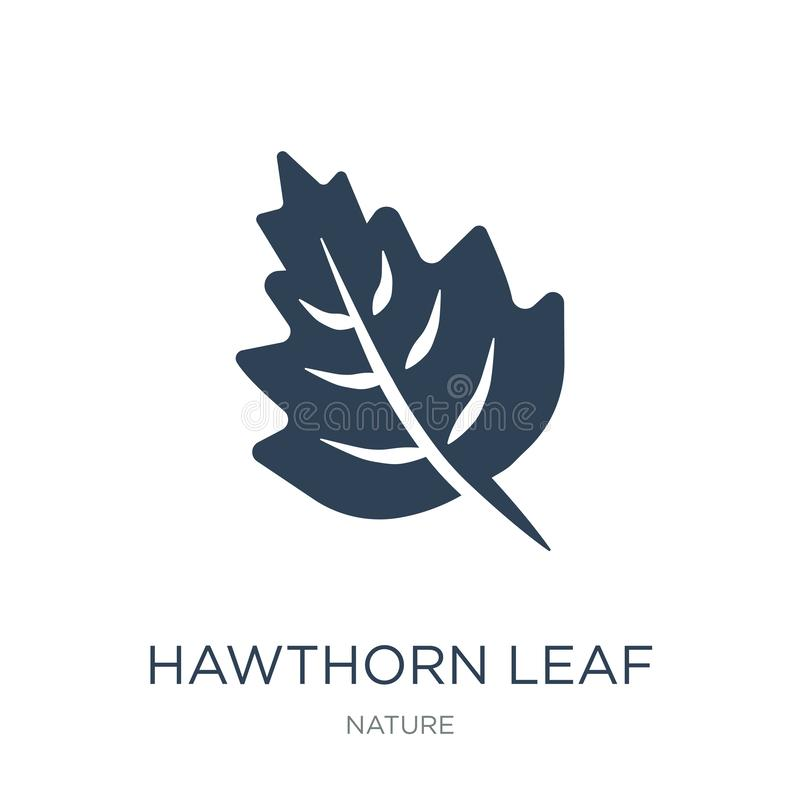 hagtornbladsymbol i moderiktig designstil hagtornbladsymbol som isoleras på vit bakgrund enkel symbol för hagtornbladvektor och stock illustrationer