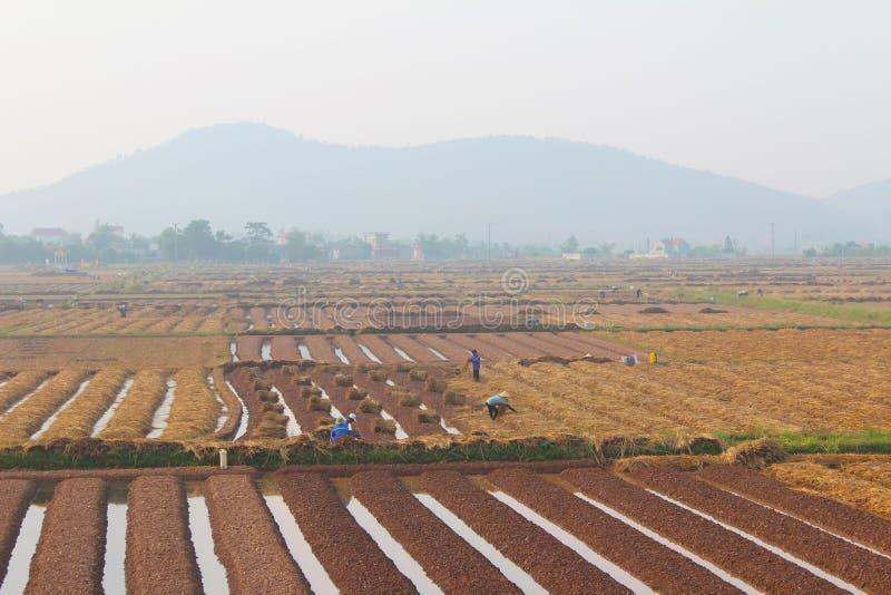 HAI DUONG, VIETNAM, Oktober, 18: Landwirte, die Gemüse in t wachsen stockfotografie