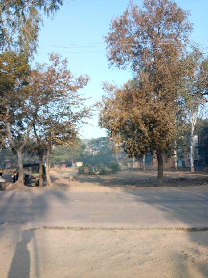 Hai och träd för gatasolkhila royaltyfria foton