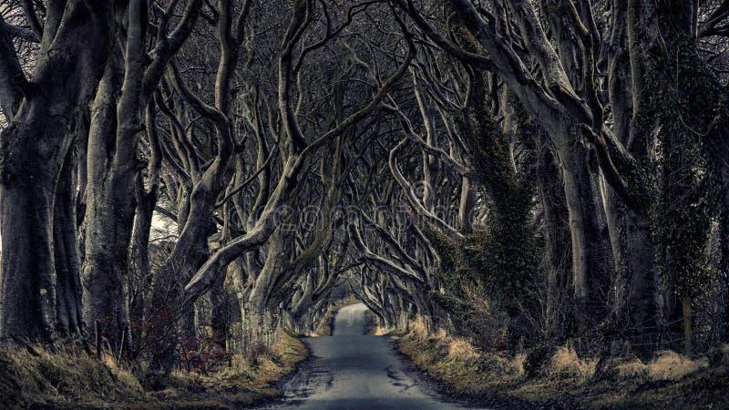 Haies d'obscurité de chemin forestier photo libre de droits