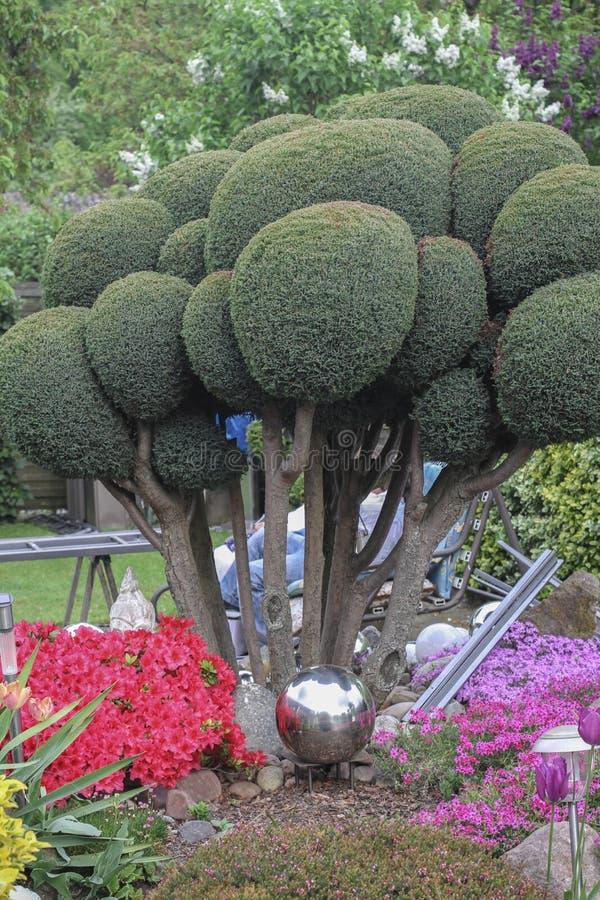 Haies Dans Un Jardin Fleuri Gentil Image stock - Image du outdoors ...