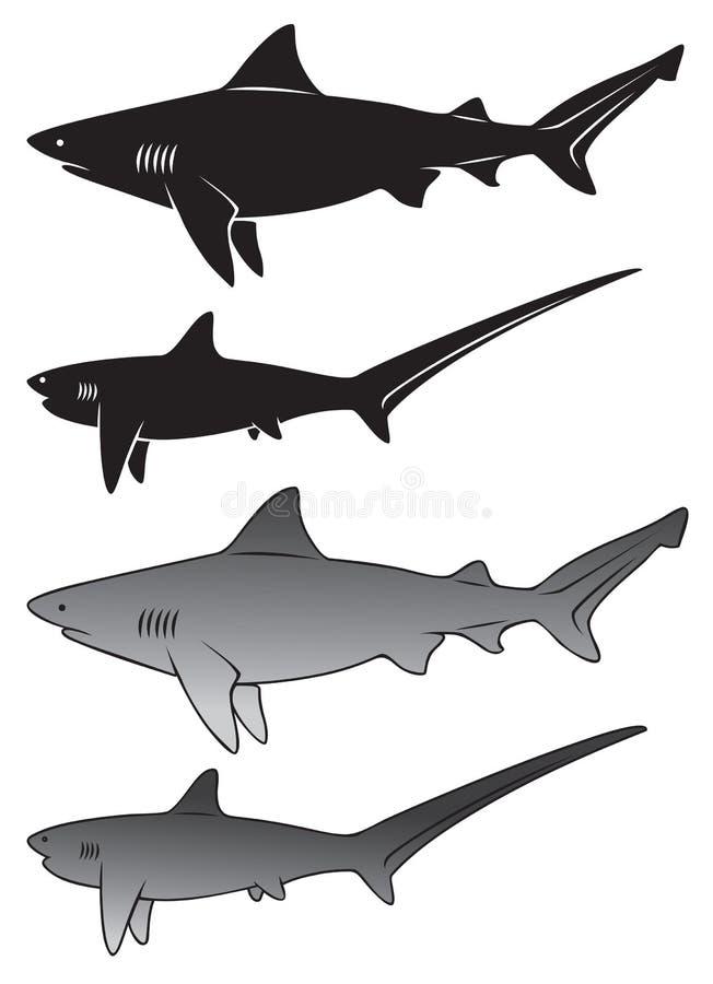 Haifisch lizenzfreie abbildung