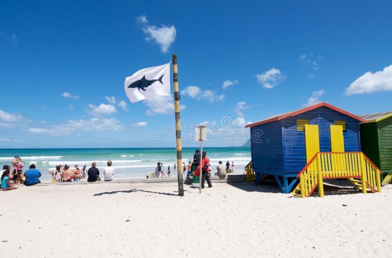 Haifisch, der Kapstadt warnt stockfotografie