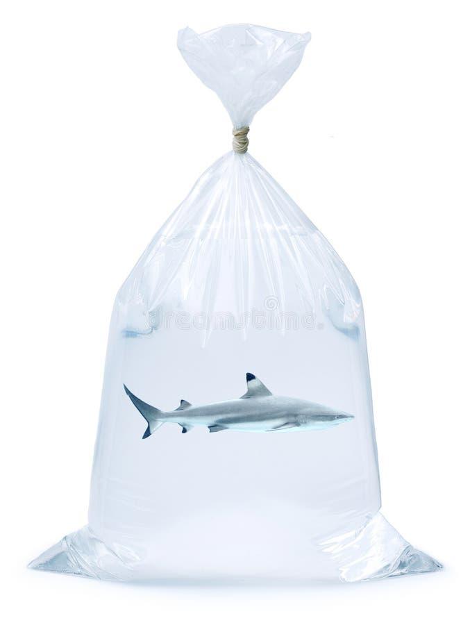 Haifisch in einem Beutel stockbild